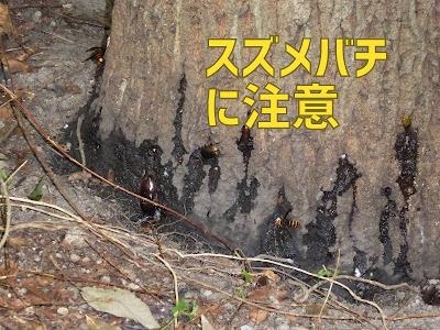 寝屋川公園のスズメバチ