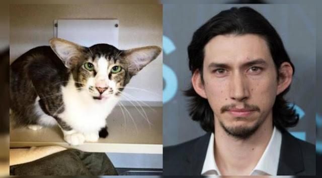 Mirip Penjahat Star Wars, Kucing Ini jadi Viral