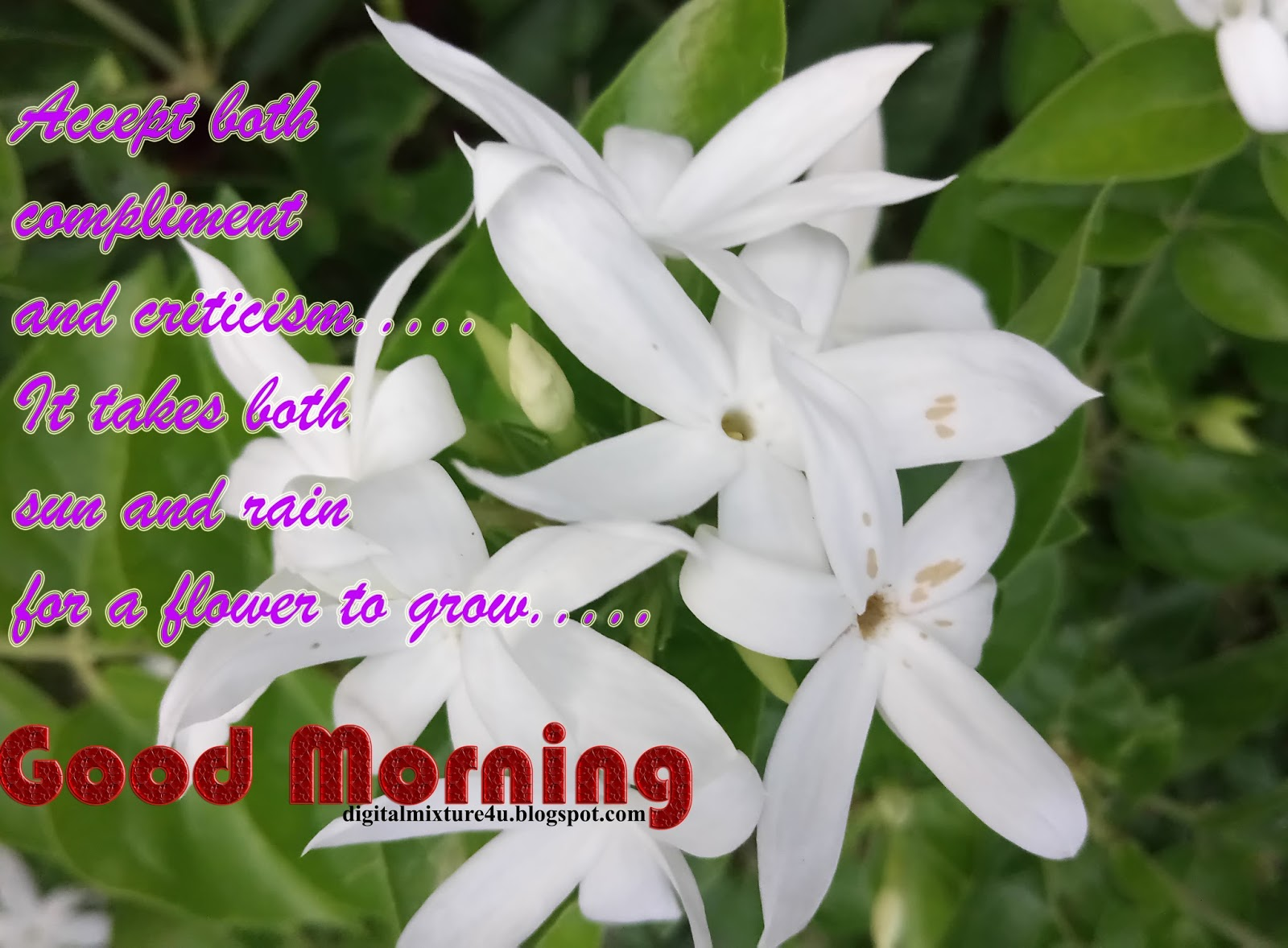 Good Morning Have A Nice Day Images Videos Telugu Movie News