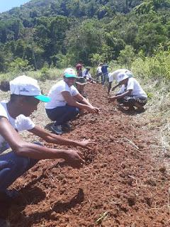Mulheres na agrofloresta: mutirão, autonomia e diversidade de alimentos