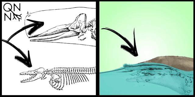 Adaptações do Dorudon, um ancestral das baleias modernas - Queimando Neurônios