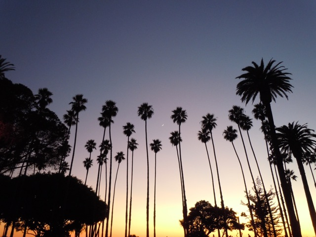Santa Monica palms at sunset