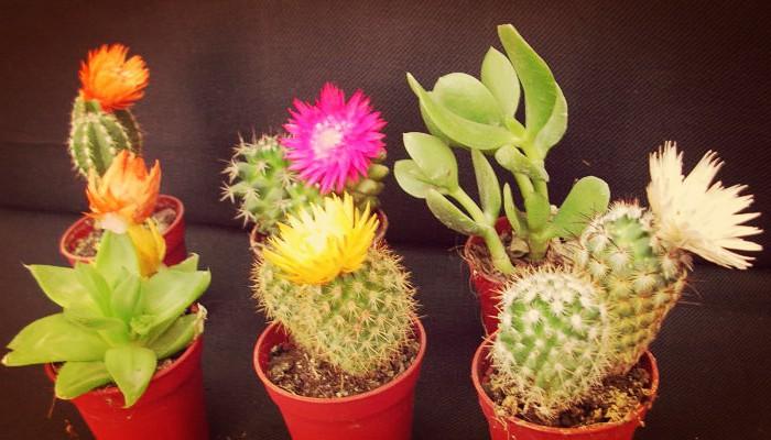 El cactus