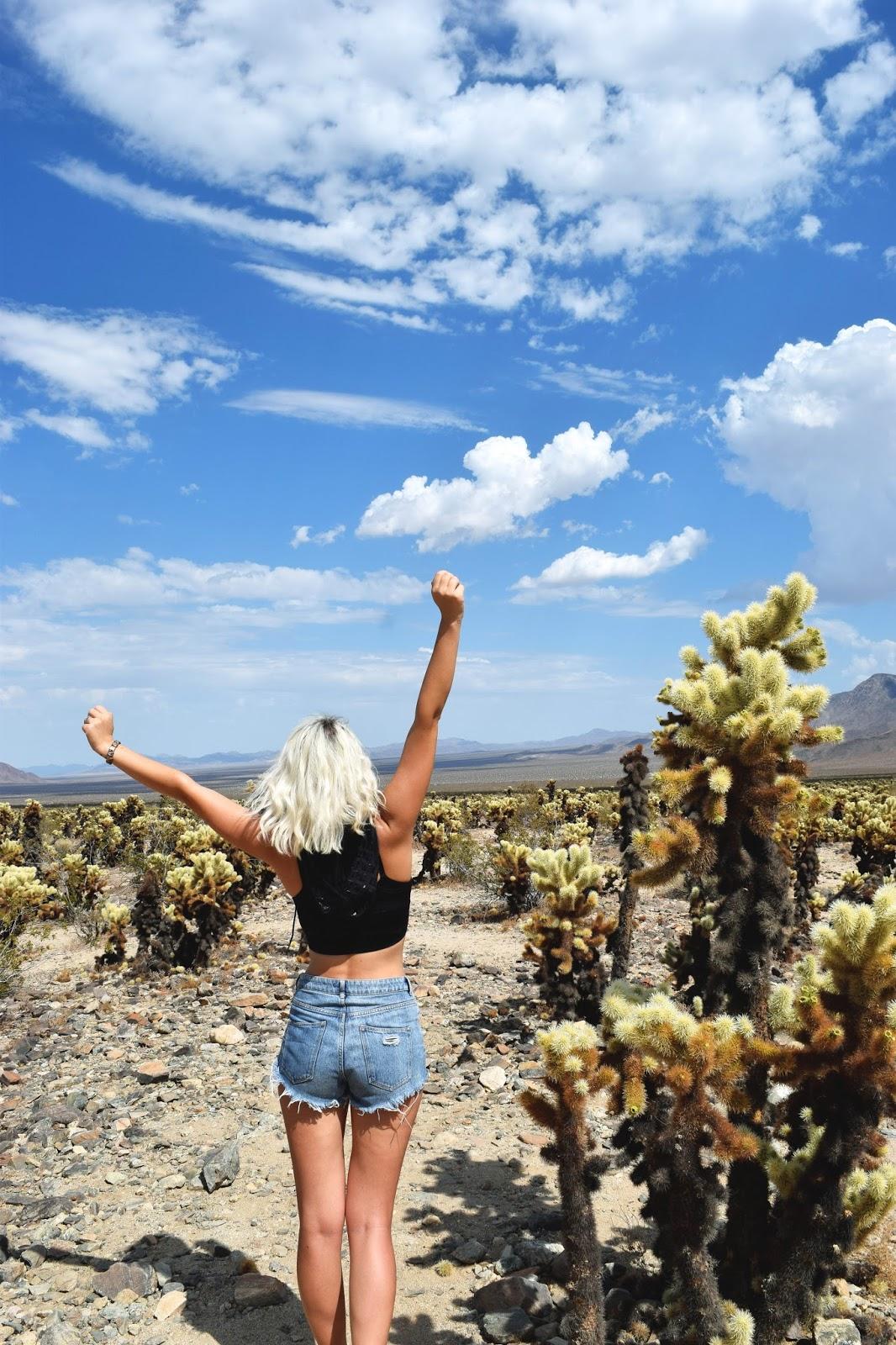 Joshua national park cholla cactus garden