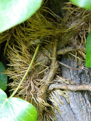 slow life przyroda blog