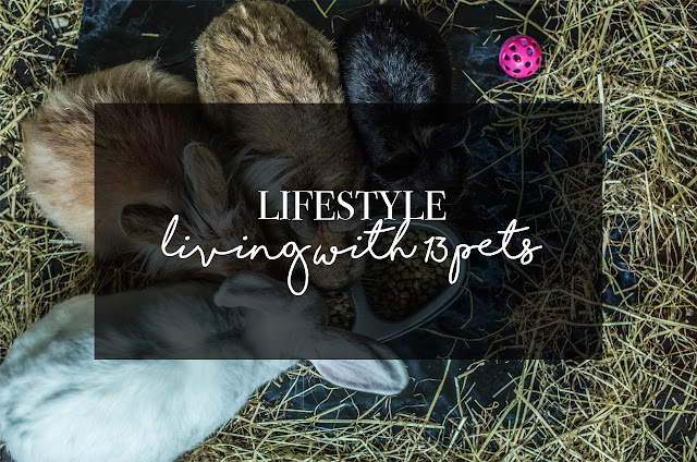 ◈ Living With 13 Pets