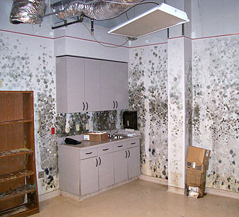 Once This Preliminary Work Is Completed You Re Able To Proceed With The Black Mold Abatement Process One Wonderful Remedy Technique Use A Hydrogen