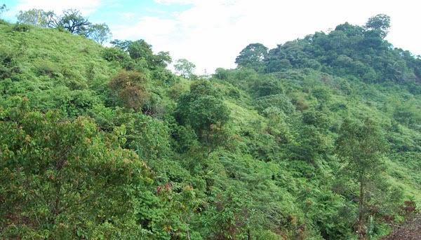 Macam-macam Jenis Hutan dan Sabana Lengkap dengan Gambar - BRIGADE 86 - Cara Cepat Belajar ...