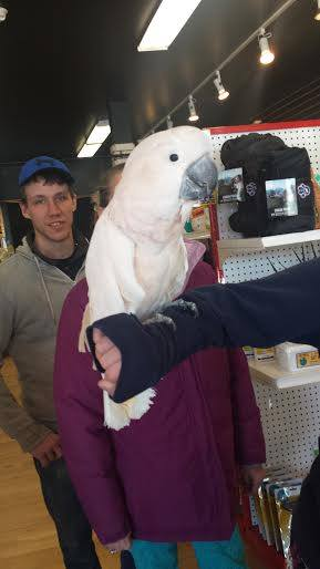 talking parrot in pet store in smiths falls