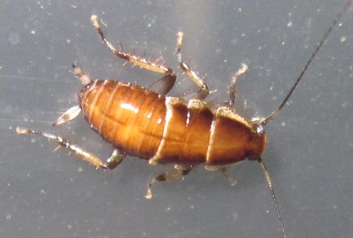 A.methanoides%25238.JPG