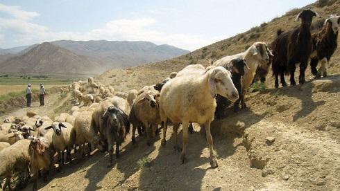 Le commerce par les nomades était-il crucial à la naissance des villes ?