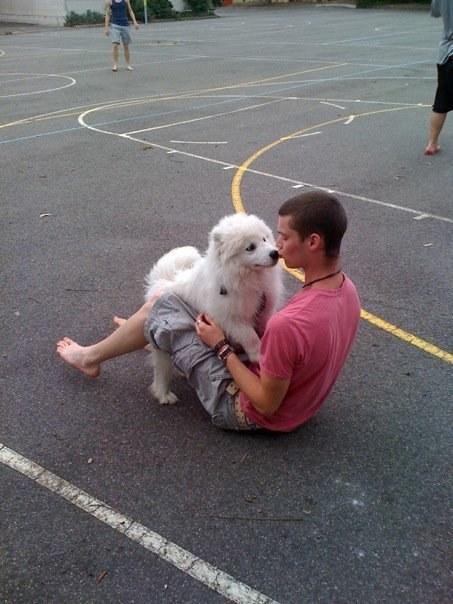 19 chú chó Samoyed đáng yêu ngay từ cái nhìn đầu tiên