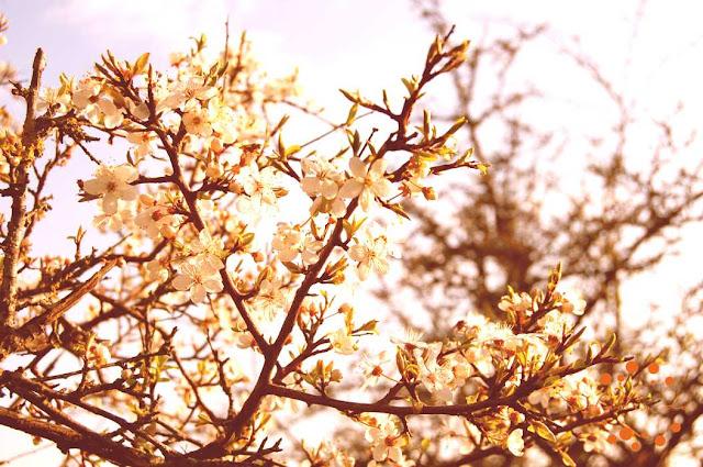Ziedošais pavasaris Liepājā