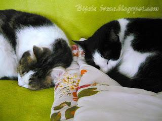 Trio Fantastic - Mr. Cat and Countess cat