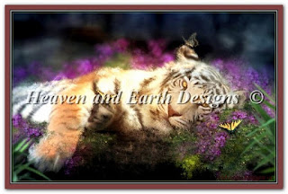 """HAED AIS-139 """"Tiger Dreams"""""""