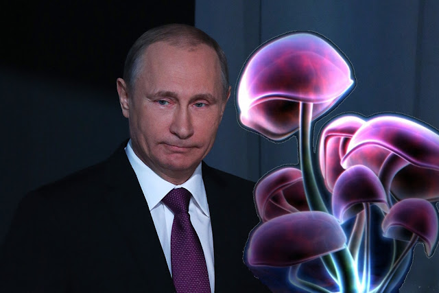 Путин и фиолетовые грибы