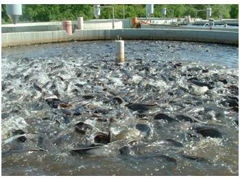 How I started My Cat Fish Farm (Semi-intensive Culture of Clarias