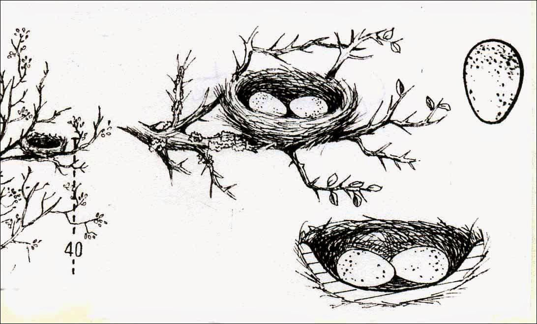 nidos de aves argentinas