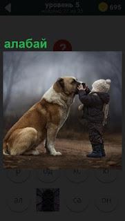 На улице девочка заботится о собаке породы Алабай, которая сидит перед ней