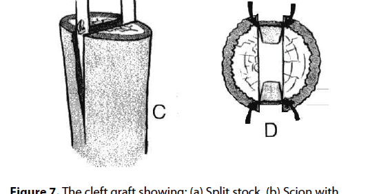 install diagram of budding and grafting