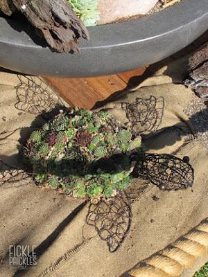 Succulent turtle full of sempervivum