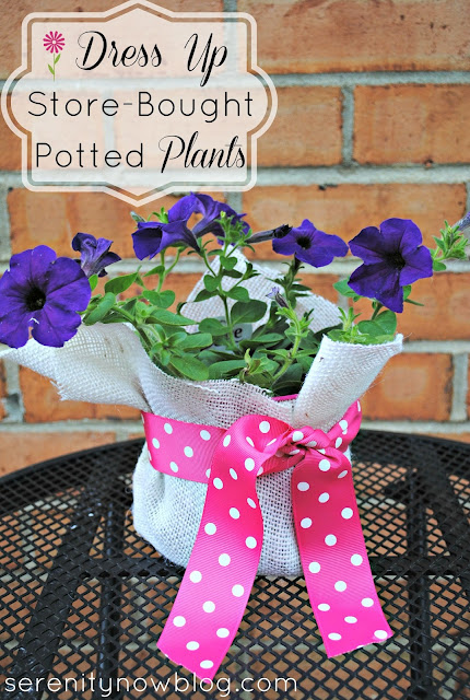 How to Dress Up Store-Bought Potted Plants (Teacher Gift Idea), from Serenity Now
