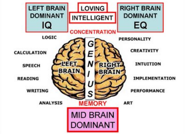 Mid Brain Dominant