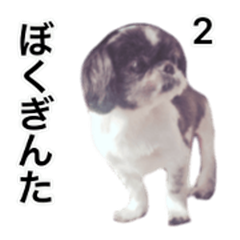 Lovely dog GINTA's sticker 2