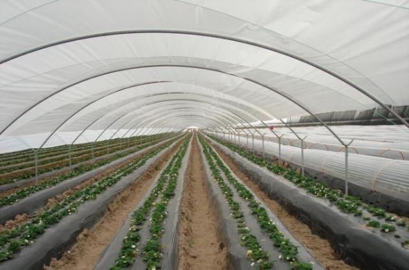 Usos del Polietileno en la Agricultura