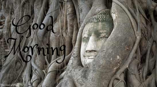 head of god bodhi tree ayutthaya image