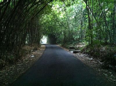 bamboo porest Desa panglipura