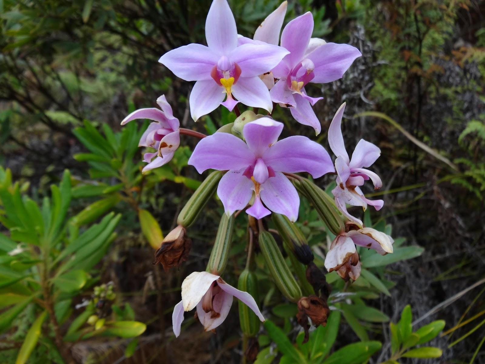 le blog de parcs et jardins de l 39 oise un gros bouquet d 39 orchid es pour no l. Black Bedroom Furniture Sets. Home Design Ideas