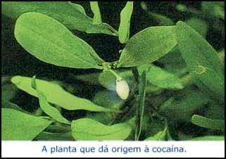 História da Cocaína