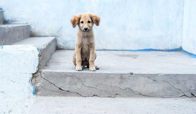 Perritos en adopción en Zacatlán