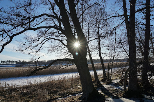 Winter landscape in Linnes Hammarskog