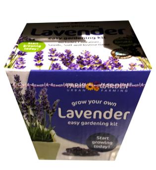 Persiapan Benih Bunga Lavender