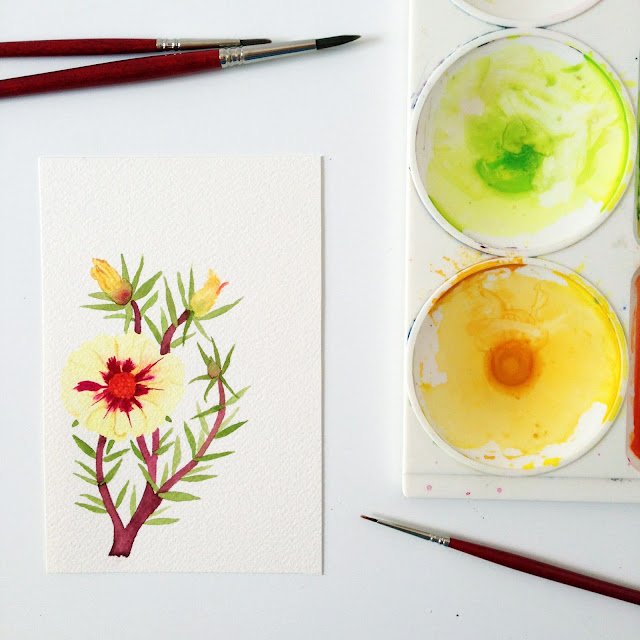 painting, watercolor, botanical watercolor, portulaca, moss rose, watercolor portulaca, Anne Butera, My Giant Strawberry