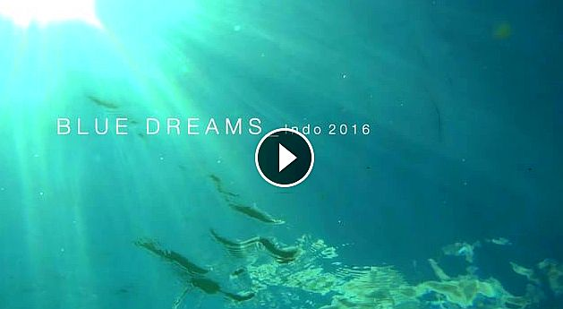 Blue Dreams Indo 2016