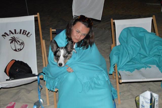 bar na plaży, plażowanie z psem, pies na plaży, biba, pies w podróży, podróże z psem, welsh corgi, welsh corgi cardigan, cardigan