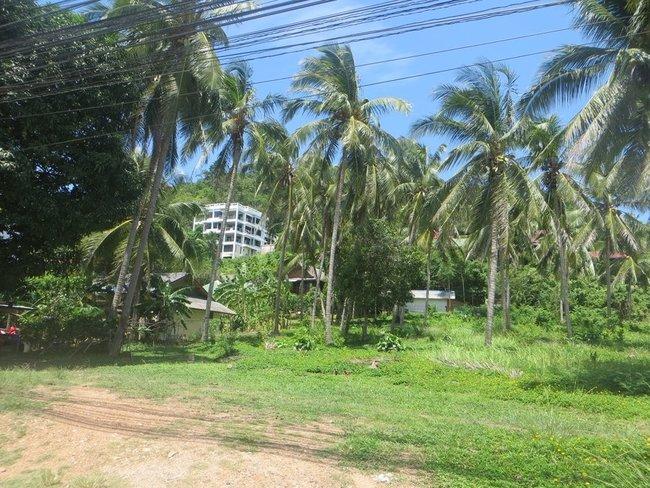 Дом за пальмами