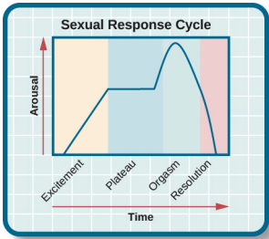sexual_response_cycle.png