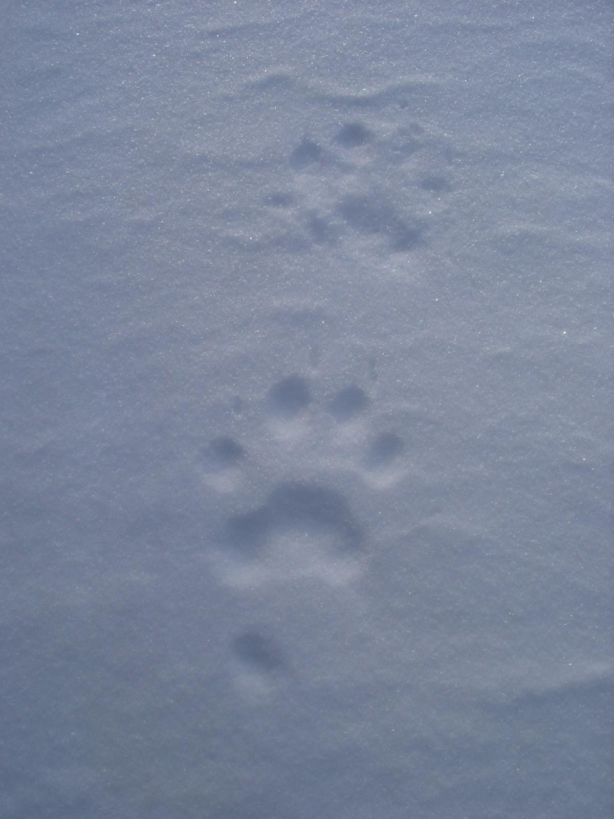 Прикольные картинки последний день зимы марлону исполнилось