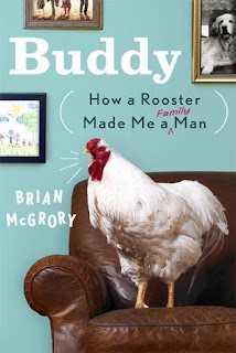 Buddy How A Rooster Made Me A Family Man by Brian McGrory