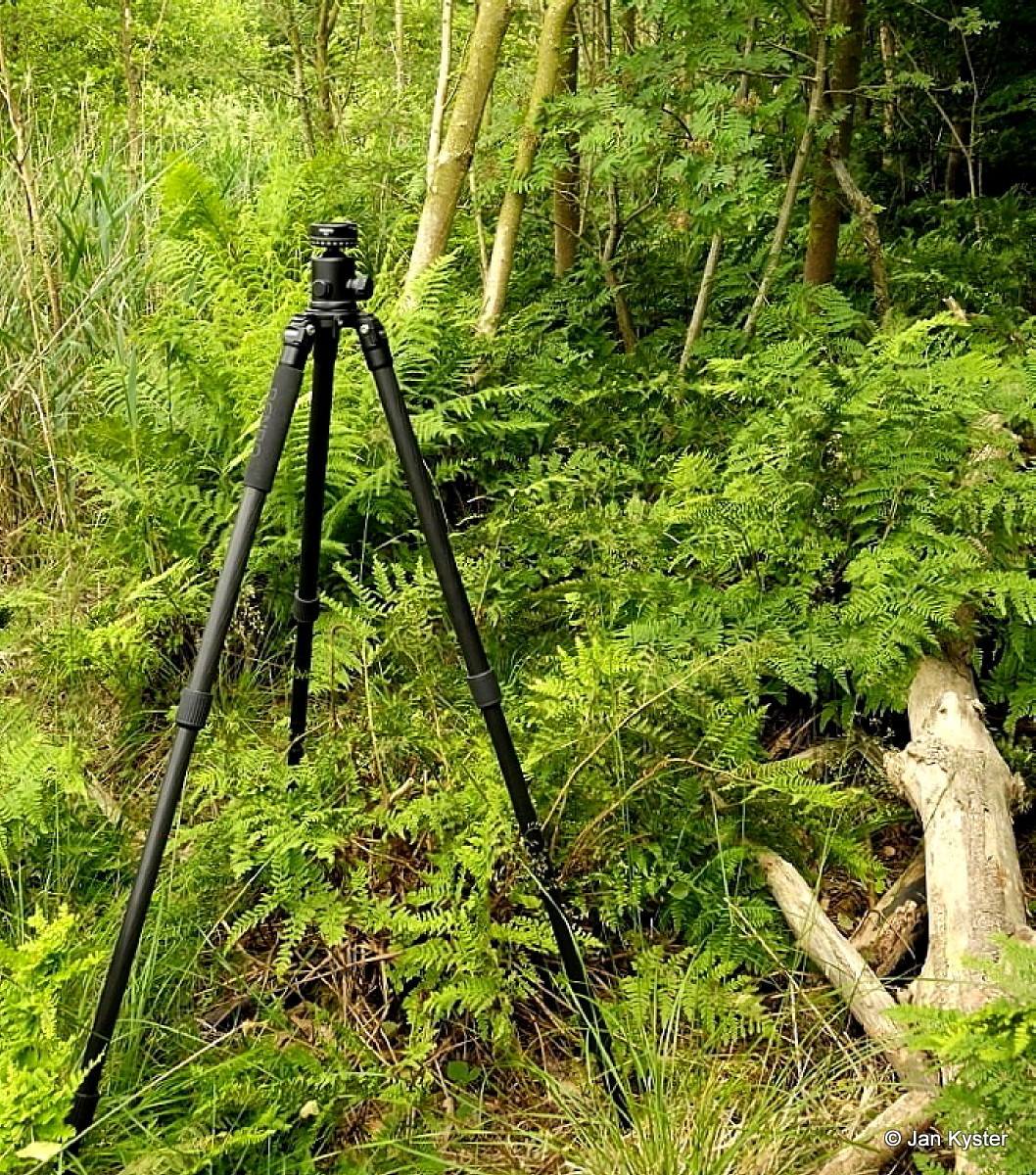 Benro C3770T CF Tripod fully extended in woods