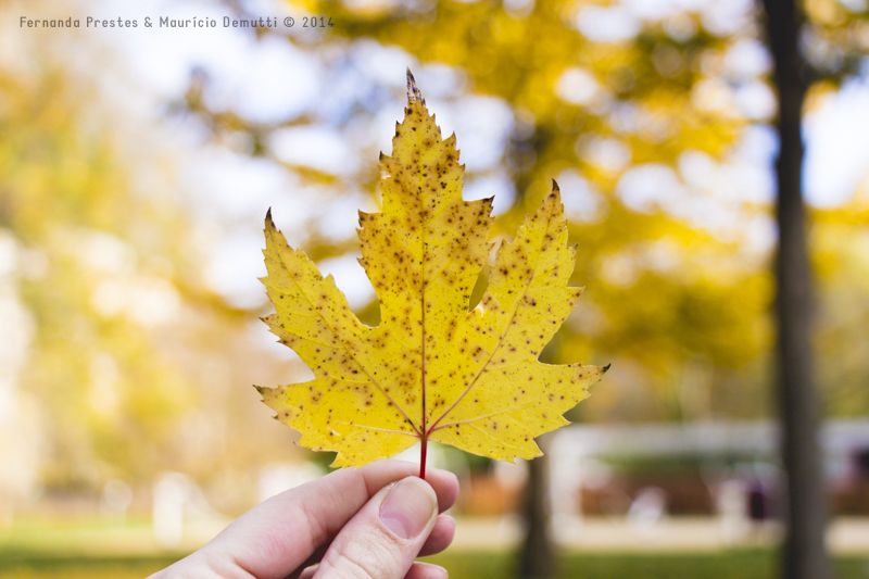 folha amarela outono Grund Luxemburgo
