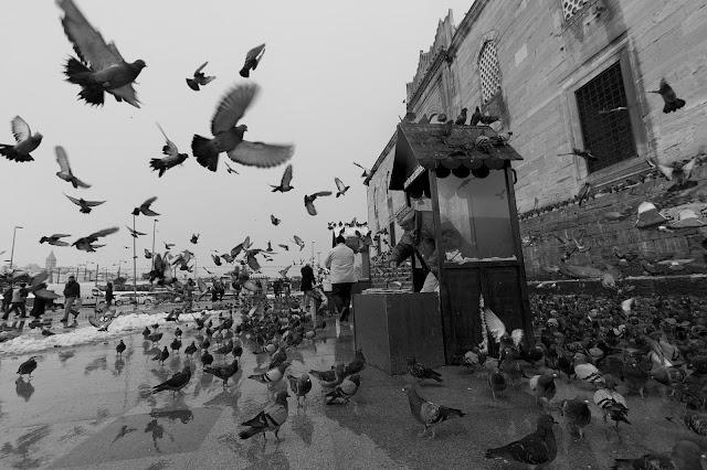 Fotoğraf Sanatçıları 7 - Fatma Şule DEMİR fotoğraf 2