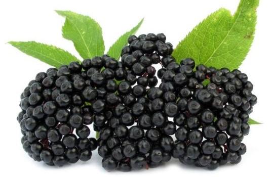 Czarny bez - zastosowanie lecznicze i w kosmetyce