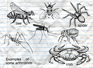 Arthropods have a role for human beings