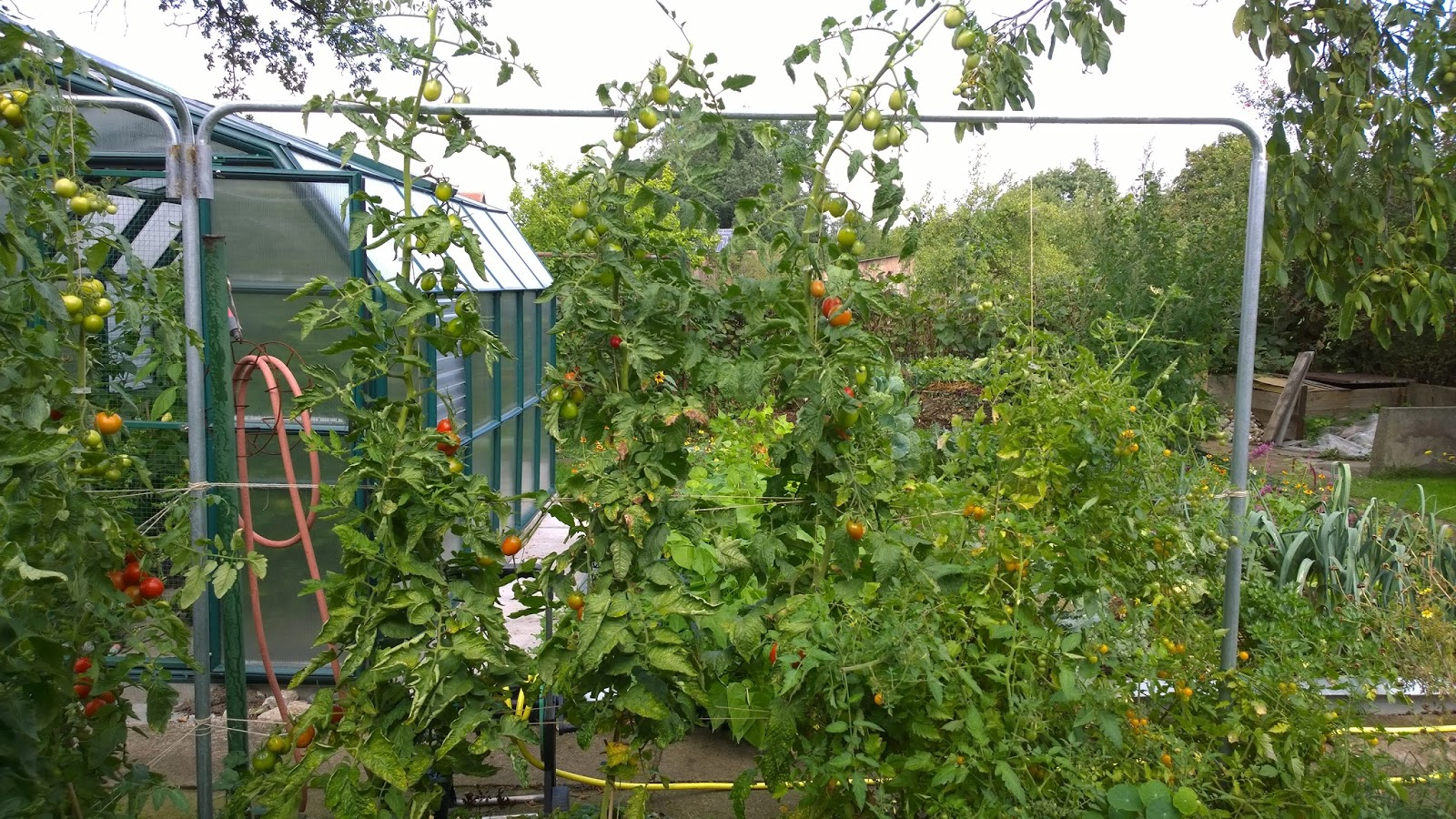 achimsgarten der selbstversorger und garten blog mein. Black Bedroom Furniture Sets. Home Design Ideas