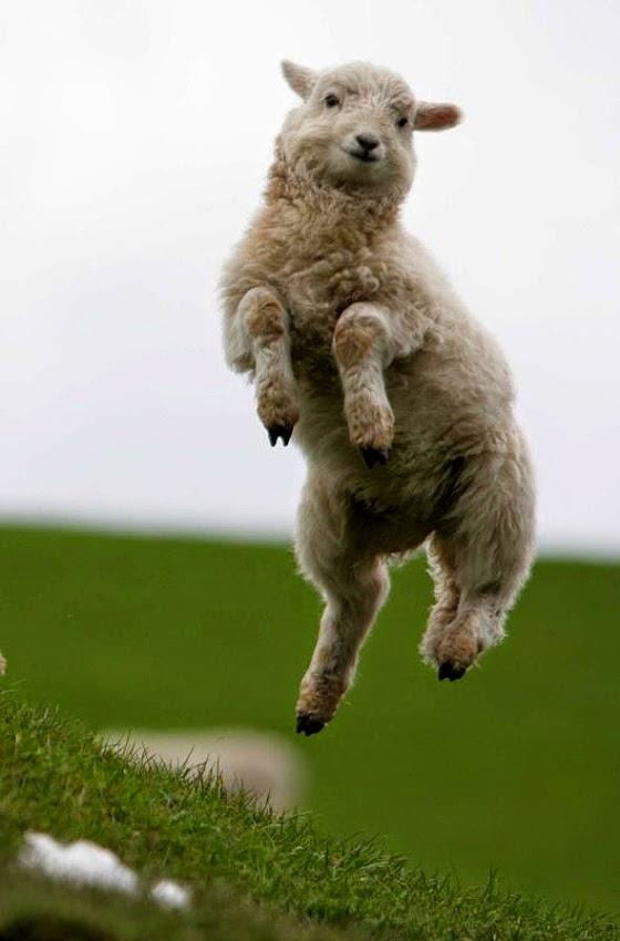 http://eugeniaoganova.blogspot.com/2014/12/2015-year-of-the-sheep-part1.html